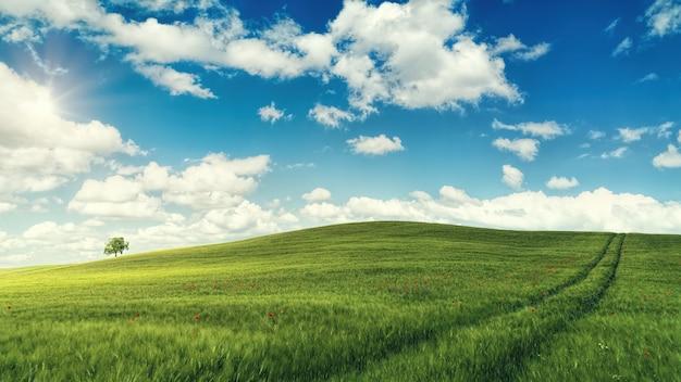 昼間の青い空と白い雲の下の緑の芝生のフィールド