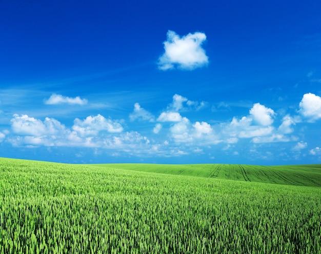 Поле зеленой травы с небом буле и белыми облаками. луг и белые облака