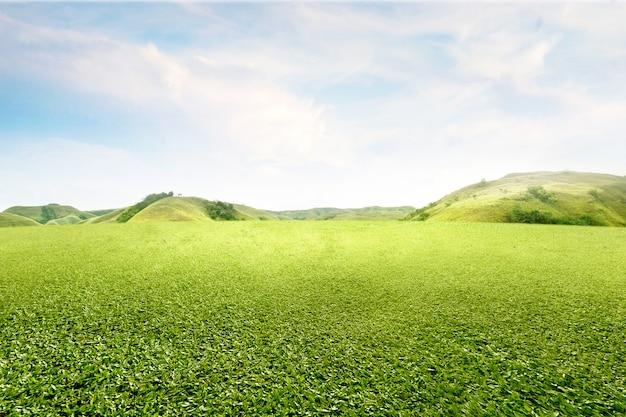 Поле зеленой травы с холмами