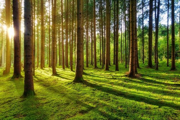 낮에는 나무와 푸른 잔디 필드