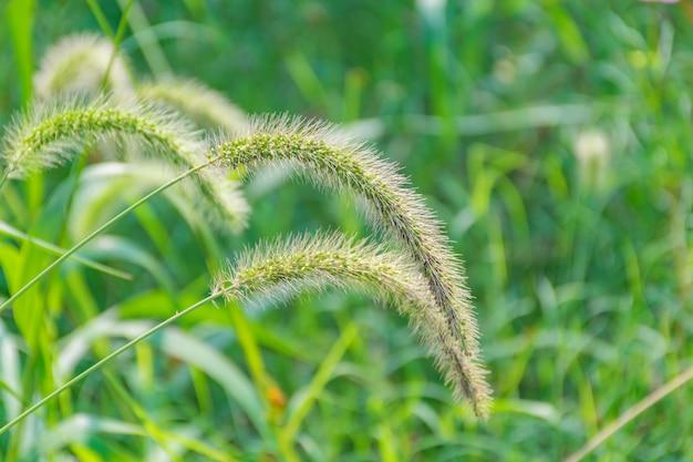 Green grass foreground