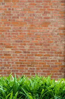 Green grass in front of the brick wall for the background