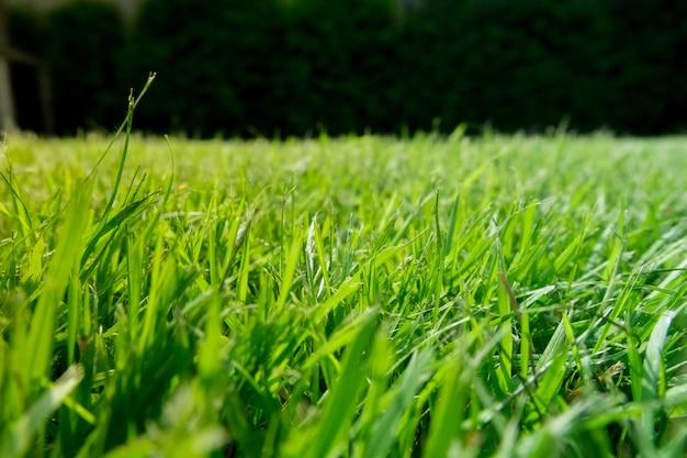 緑の芝生グラウンド濃い緑のバックグラウンド。