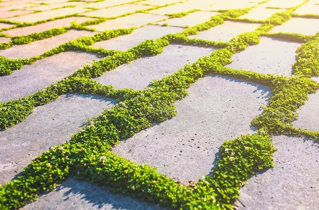 시멘트에서 자라는 푸른 잔디. 콘크리트 도로 배경에 사각형을 심습니다. 수평 원예 야외. 황량한 버려진된 거리입니다. 도시 자연 개념입니다. 장식적인 조경 디자인.