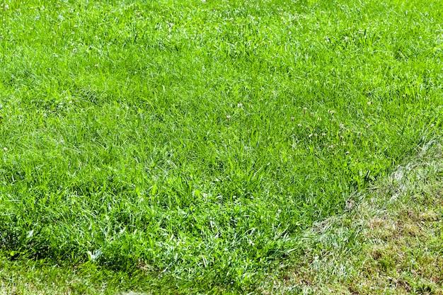 Зеленая трава, растущая в поле, и различные растения, в том числе для кормления домашних животных и выпаса скота.