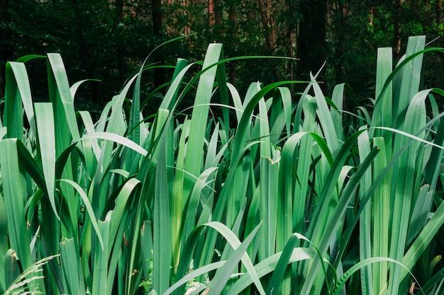 昼間に庭に生えている緑の草