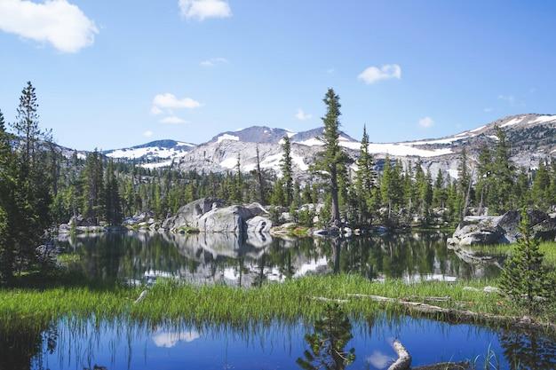 Зеленая трава растет в воде с деревьями и горами возле озера тахо, калифорния