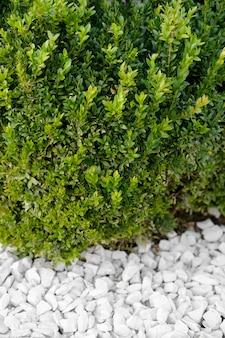 Зеленая трава растет на лужайке между декоративными камнями, ландшафтный дизайн. крупный план