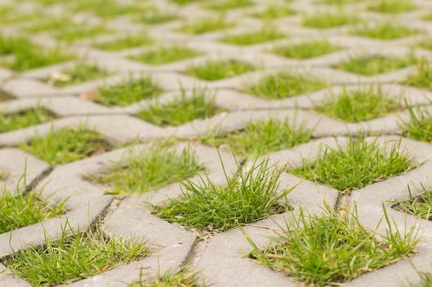 Зеленая трава растет сквозь брусчатку крупным планом