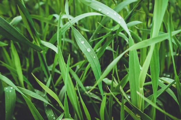여름 초원, 여름 배경에 푸른 잔디