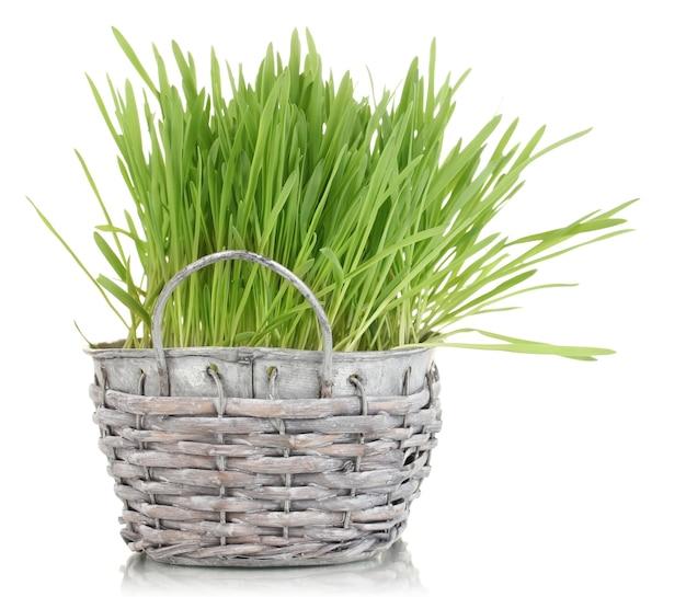 白で隔離のバスケットの緑の草