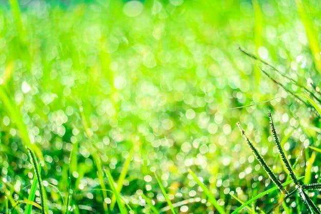 Зеленая трава в саду и размытие капли воды на листьях утром