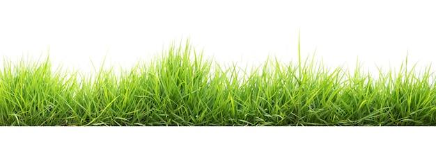 Зеленая трава в саду изолировать на белом