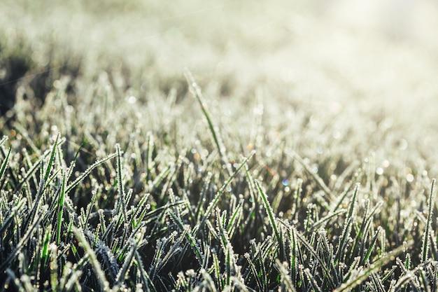 霜の緑の草
