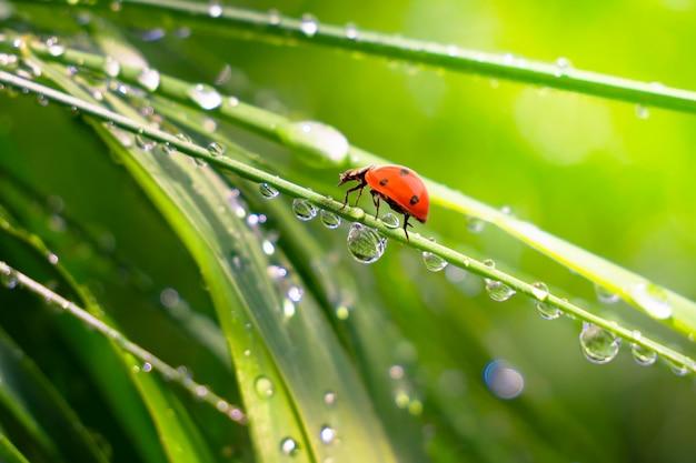 雨滴と自然の中で緑の草