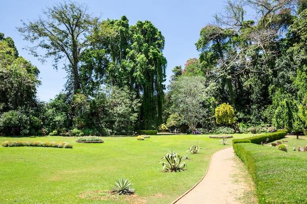 スリランカの公園の緑の草。セイロンの自然