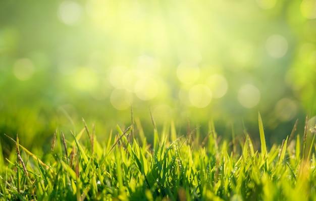 朝は金色の太陽の下で緑の芝生の上に空きスペースがあります。