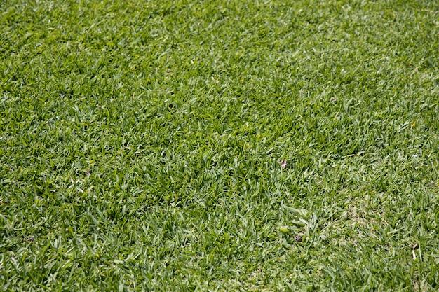 自然の中で緑の草