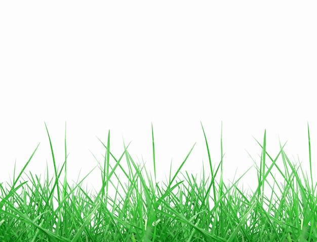 白の上に分離された緑の草