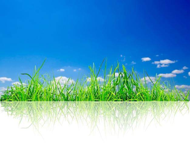 白い背景の上の緑の草の分離