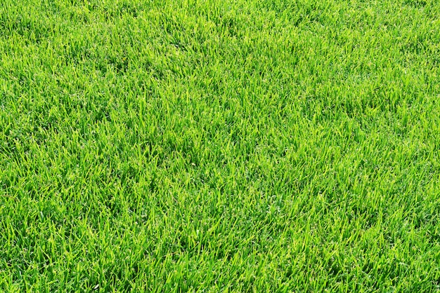Green grass lawn or field background
