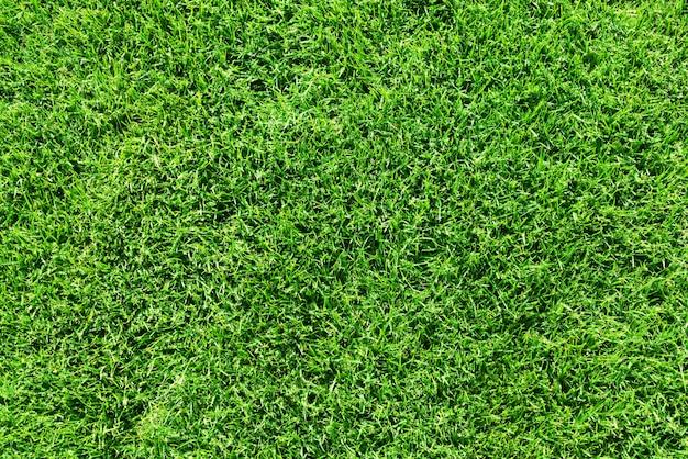 Green grass lawn or field