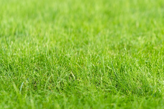 Green grass lawn in the garden, green flooring making concept, football pitch training or golf lawn