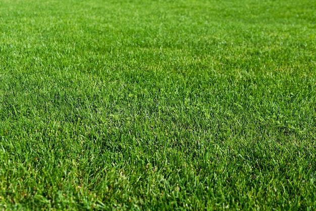 Green grass lawn in the garden, green flooring
