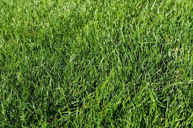 庭の緑の芝生、緑のフローリング