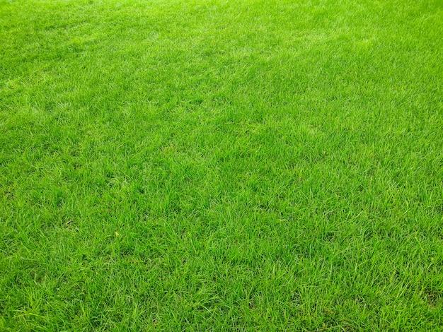 Зеленая трава газон текстуры фона в парке