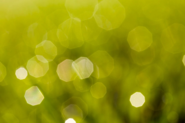 Green grass lit by sunlight with drops of dew or rain is out of focus , dew looks like a glare on a green abstract background