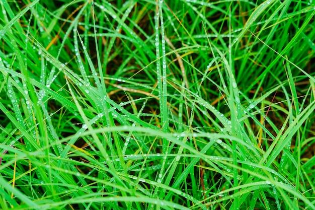 푸른 잔디 매크로는 물 방울과 함께 잔디에 물방울을 닫습니다.