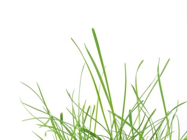 푸른 잔디 초원