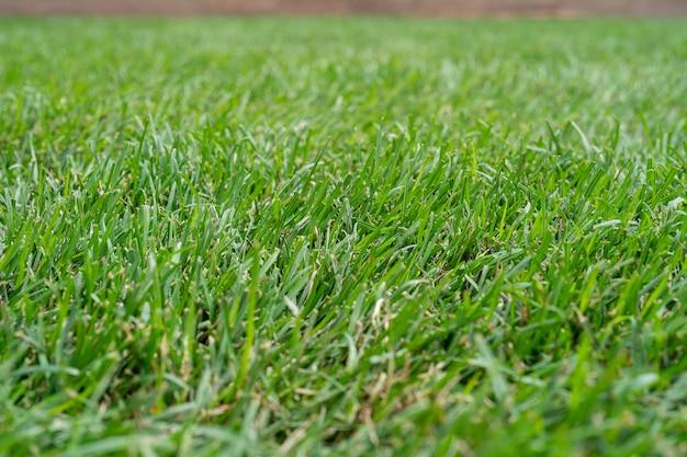 緑の草の自然な背景のテクスチャ緑の芝生のクローズアップ新鮮な緑の草の画像