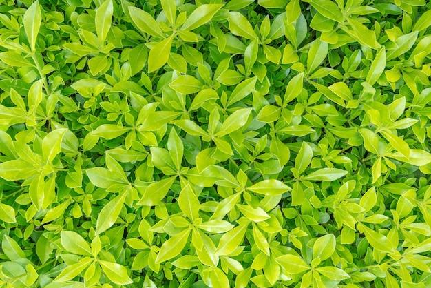 緑の草の自然な背景のテクスチャ。