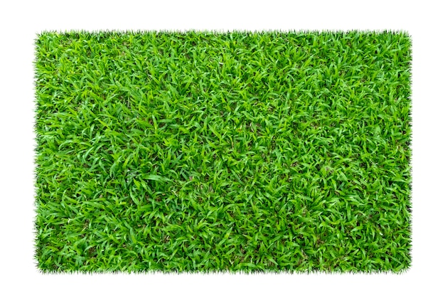 Green grass. natural texture background. fresh spring green grass. isolated on white background