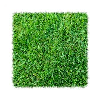 Green grass. natural texture background. fresh spring green grass
