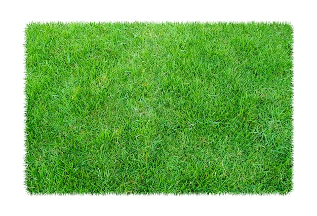 Green grass. natural texture background. fresh spring green grass