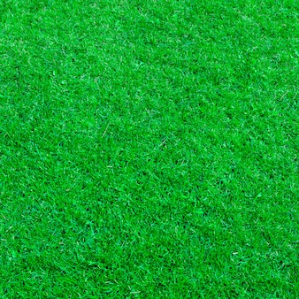 Green grass natural texture background