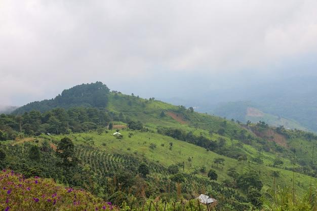 Green grass on nature mountain in rainny season