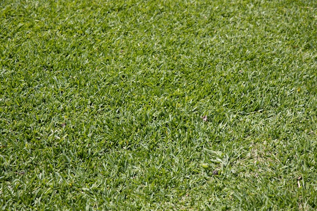 Green grass in the nature