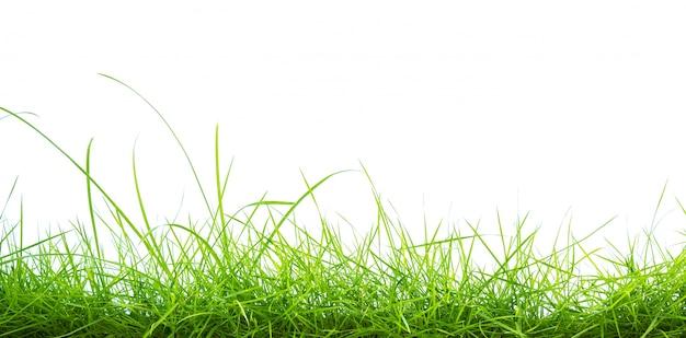 Зеленая трава на белом фоне