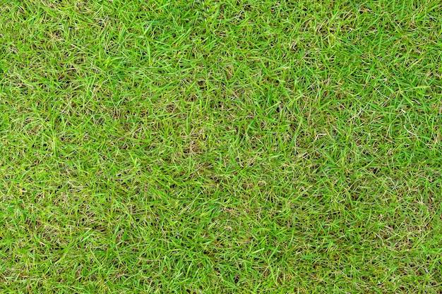 녹색 잔디 패턴 및 질감 배경입니다. 클로즈업 이미지.