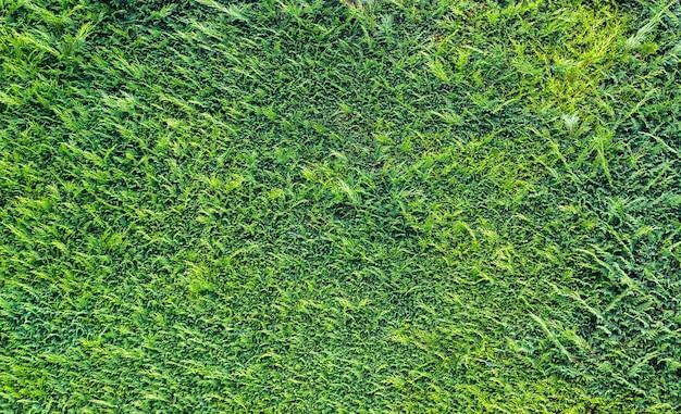 녹색 잔디 패턴, 식물 배경입니다. 잔디 배경 화면, 여름 필드 또는 초원 자연