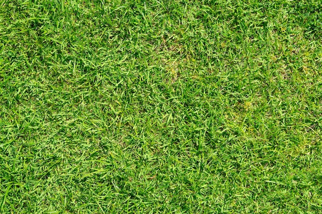 Green grass pattern and texture for background. close-up image.