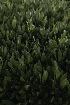 緑の草パターンテクスチャ背景 Premium写真