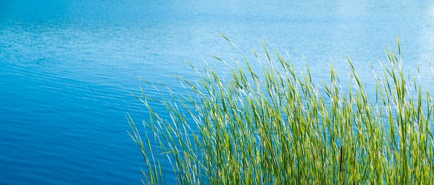 Erba verde sulla riva di un lago calmo in una giornata di sole