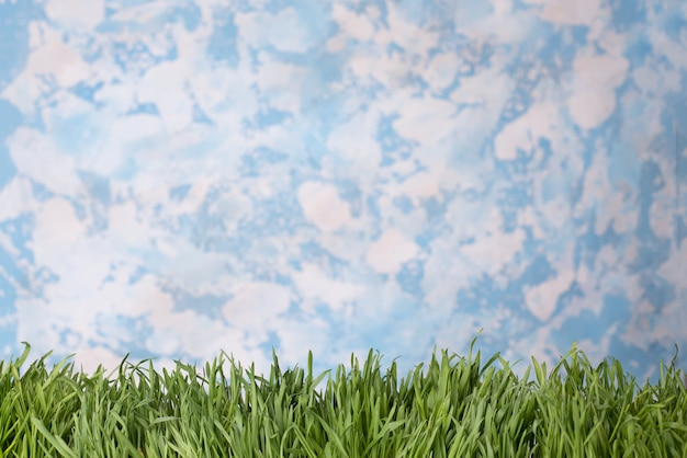 Green grass over sky background.