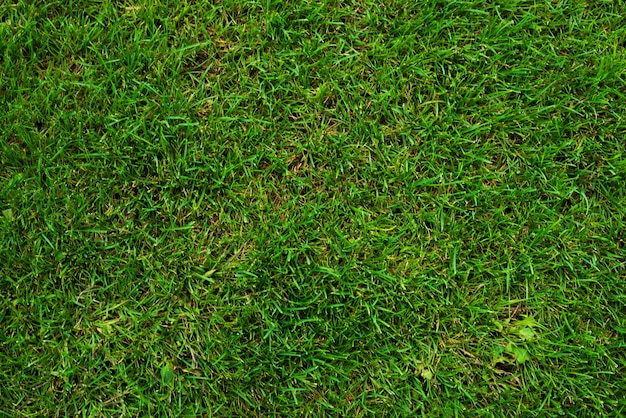 Green grass on soccer field as background