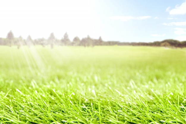 Green grass on the springfield with trees and sunlight
